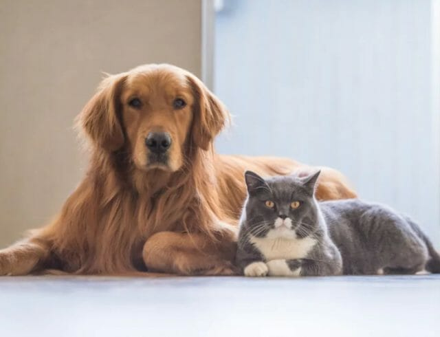 Dog & Cat Proofing Your Watches